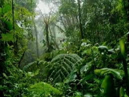 Rain Forest Of Mayacan