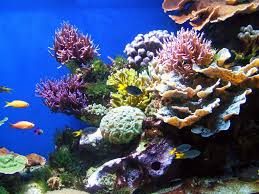 The Coral Reefs Are Very Healthy
