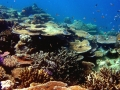 Belize is Home to the Second Largest Reef in the World