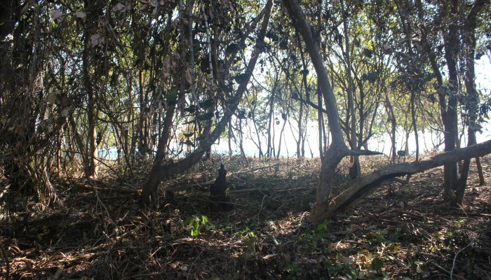 Lot # 58 - a flat waterfront lot with light vegetation and ready for building. Price: $135,000