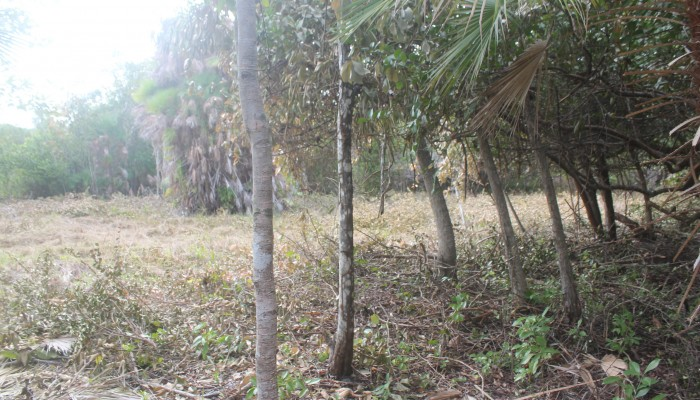 Lot # 88 - a flat semi waterfront lot with light vegetation and ready for building. Price: $50,000