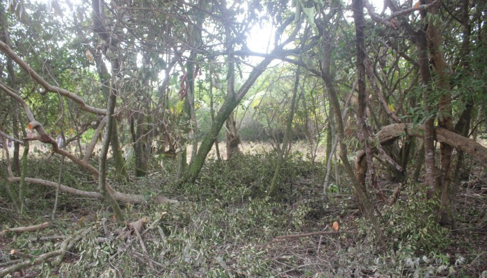 Lot # 89 - a flat semi waterfront lot with light vegetation and ready for building. Price: $50,000