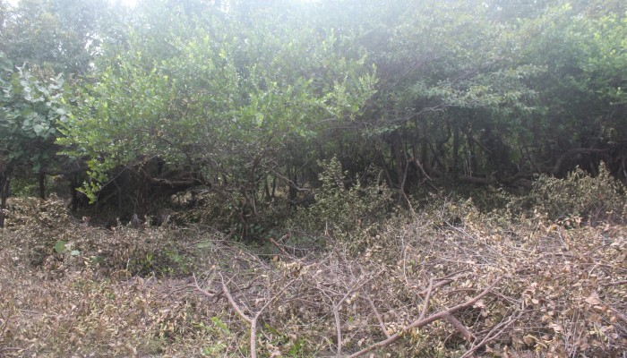 Lot # 90 - a flat semi waterfront lot with light vegetation and ready for building. Price: $50,000
