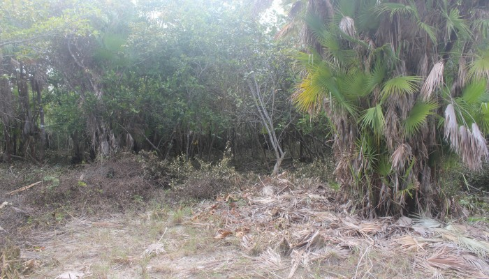 Lot # 91 - a flat semi waterfront lot with light vegetation and ready for building. Price: $50,000