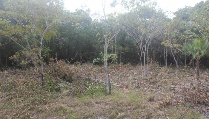 Lot # 92 - a flat semi waterfront lot with light vegetation and ready for building. Price: $50,000